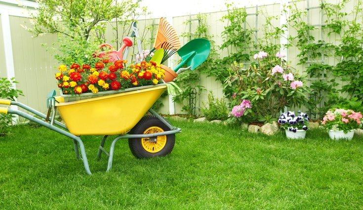 Planifica el cultivo de flores, plantas, frutas y verduras en función de la época del año