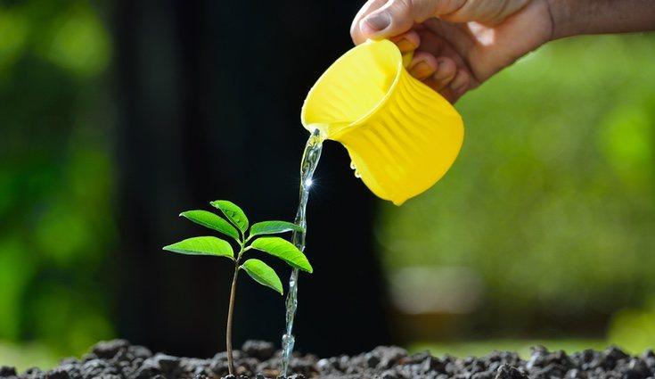 No te olvides de regar adecuadamente dependiendo del tipo de suelo al que te enfrentes