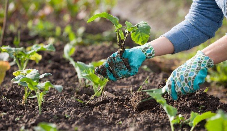 El humus de lombriz contiene una gran selección de enzimas para la fertilidad del suelo