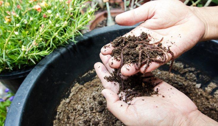El Humus de lombriz es un producto que se obtiene del vermicompostaje