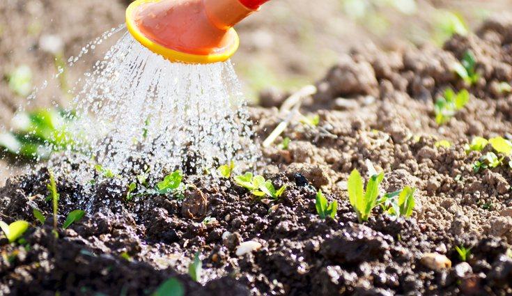 El riego depende del tipo de cultivo y de cada estación del año