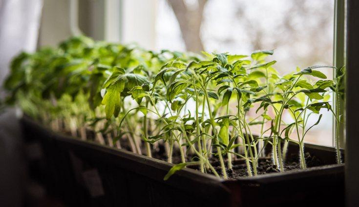 Intenta ubicar la mesa de cultivo en un sitio donde la luz del sol llegue sin problemas