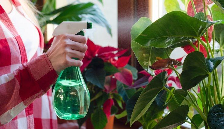 La mejor forma de limpiar una planta es simplemente con agua