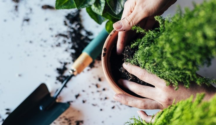 Las plantas de interior deben recibir cuidados para mantenerse sanas