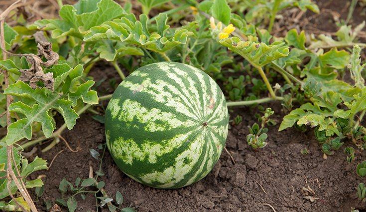 El hecho de consumir alimentos 100% naturales, van a contribuir en mayor medida en la salud