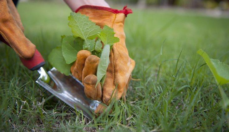 Hay que eliminar las malas hierbas para un mayor provecho del agua