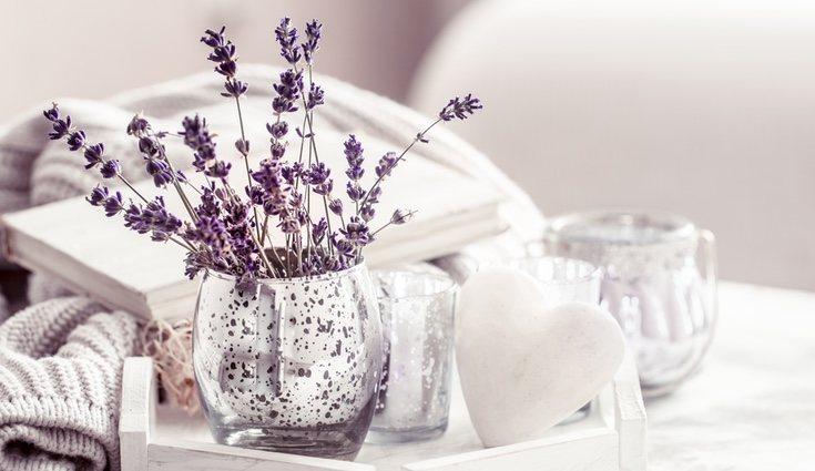 La lavanda alivia las tensiones y calma el estado de ánimo