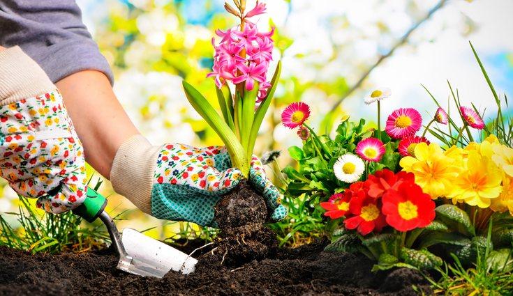 Es esencial que respetes la cantidad de agua necesaria para el bienestar de cada planta