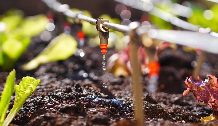 El riego por goteo permite proporcionar el agua que las plantas necesitan de manera controlada