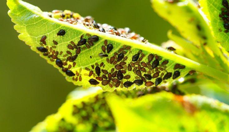 Tenemos que aprender a detectar los signos de enfermedades, como los hongos, para actuar a tiempo