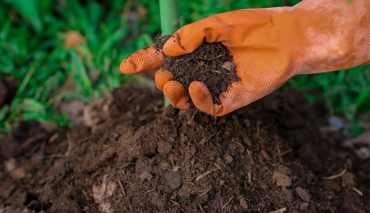 Para prevenir plagas en tus plantas es aconsejable usar abono orgánico