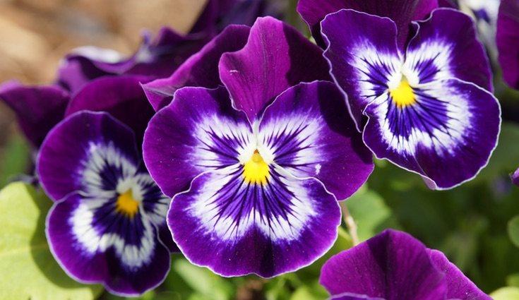 Para que tus plantas sobrevivan todo el año cuídalas y protégelas de plagas