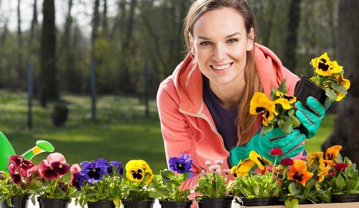 Aporta un toque de color a tu jardín con esta planta tan bonita