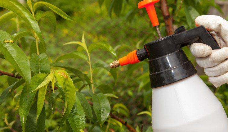 Se deben cuidar a diario con fertilizantes y controlando el riego