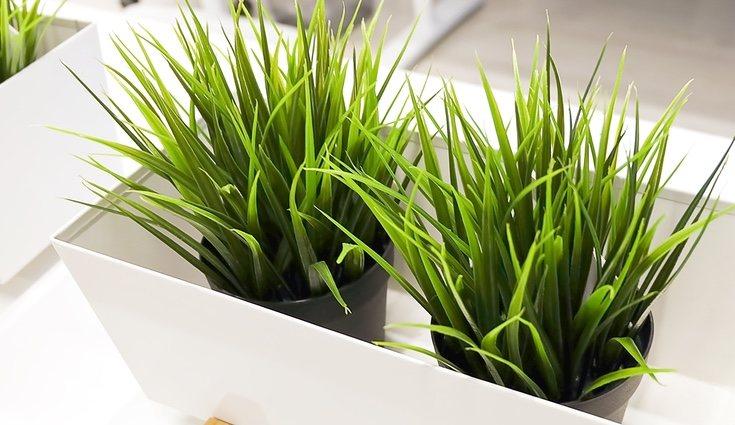 Existe una gran variedad de plantas artificiales