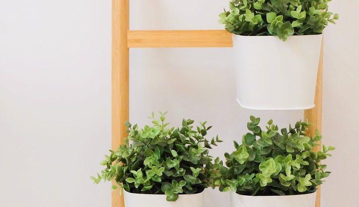 Es una buena idea para decorar ya que parecen muy naturales