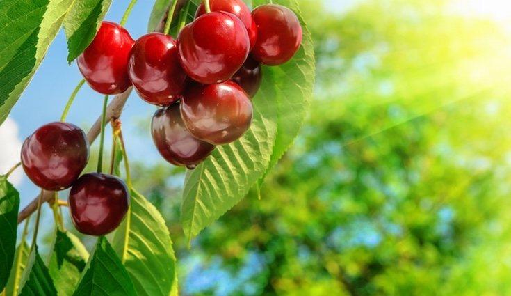 Las cerezas son una de las frutas más ricas y saludables