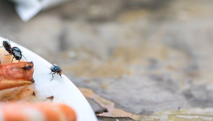 El hecho de ahuyentar las moscas de la comida con el número 58 no es no está comprobado científicamente