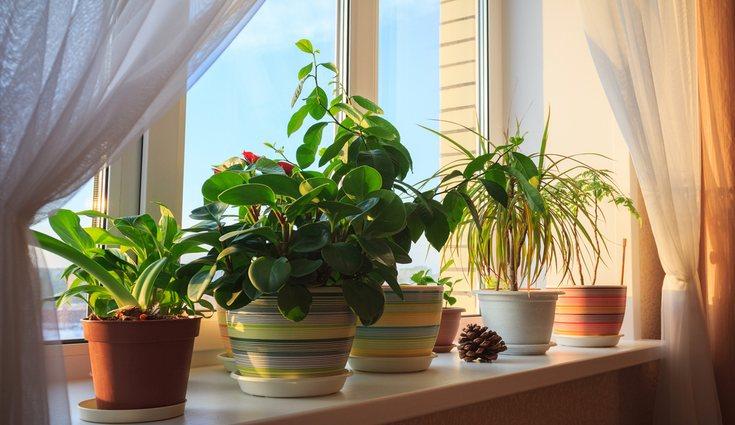 Hay muchas falsas creencias en lo relativo a la decoración, especialmente con las plantas