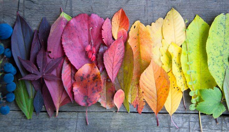 A pesar del color de las hojas en el otoño