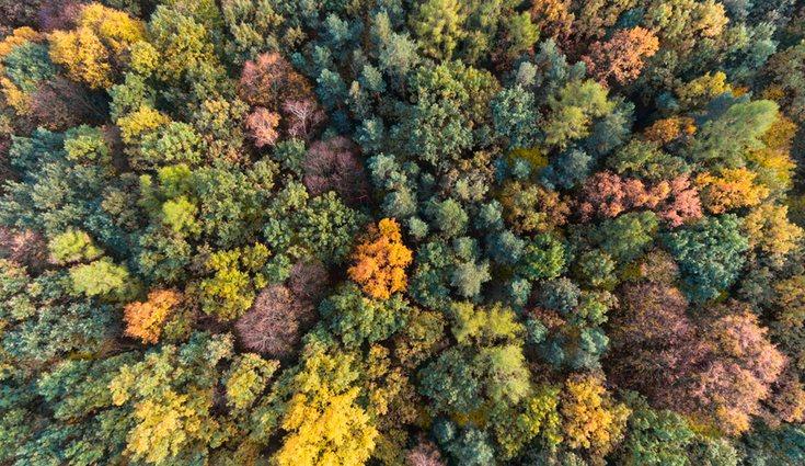 El otoño crea preciosos paisajes