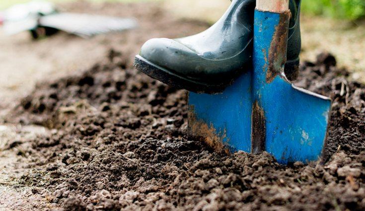 Habrá que excavar la tierra con una profundidad de 15 o 20 centímetros