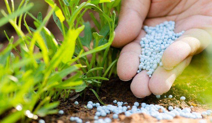 También se recomienda añadir a la zona cultivada fertilizantes orgánicos