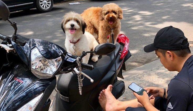 Existen muchas dudas sobre si un perro puede ser transportado en una moto