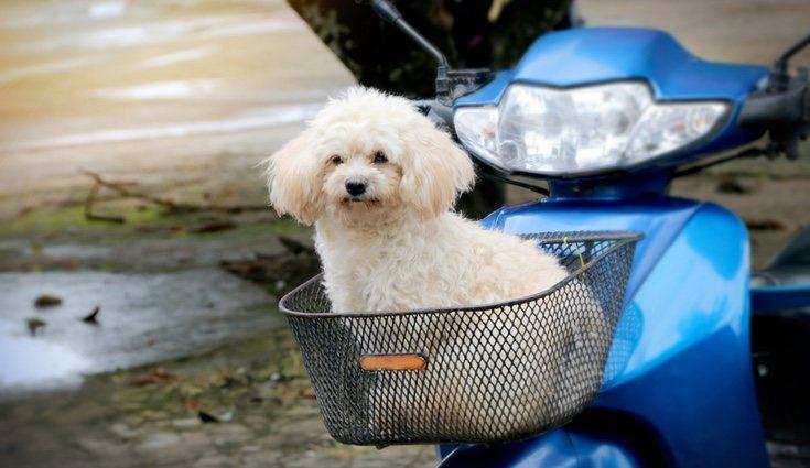Siempre hay que pensar la forma más segura de que nuestra mascota viaje con nosotros