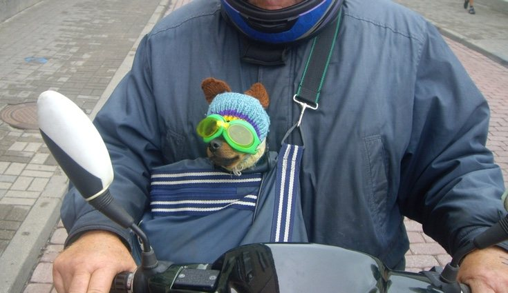 Una mochila homologada puede ser una buena opción para transportar a perros pequeños