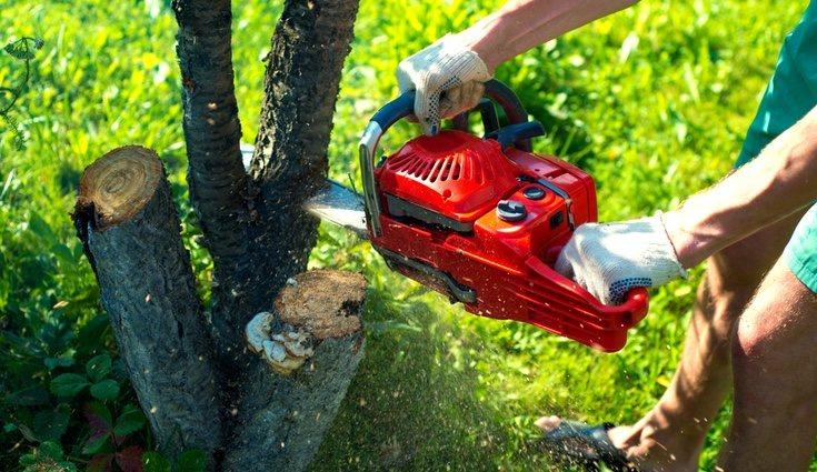 Es importante consultar la herramienta adecuada para cortar cada árbo