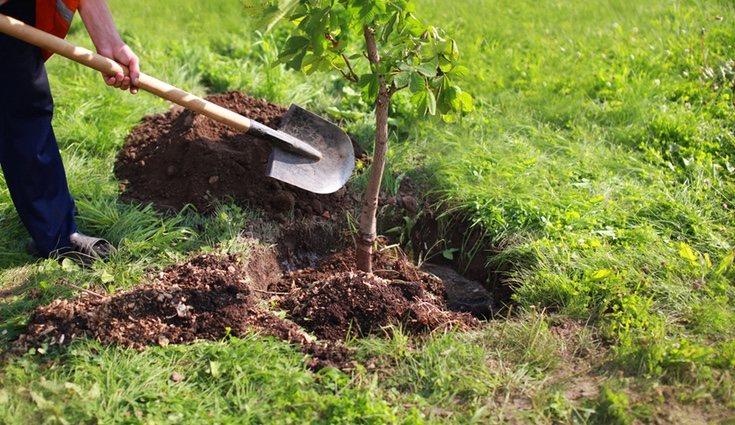 Los árboles transforman el espacio del jardín