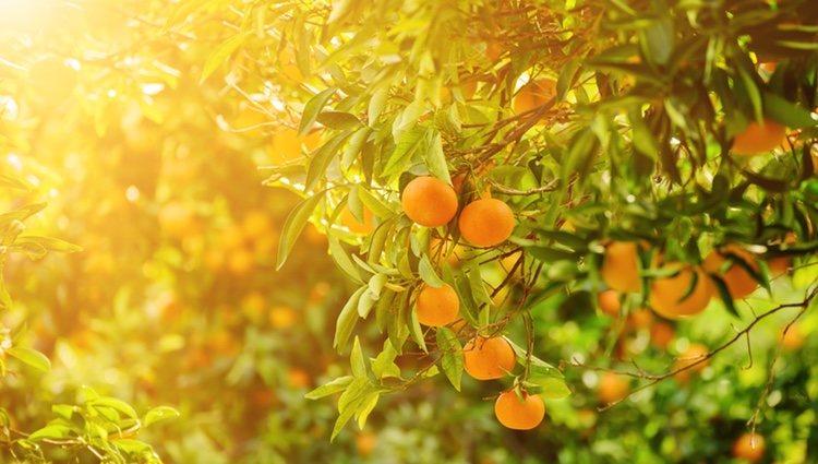 Se hace para estimular el crecimiento de los frutos