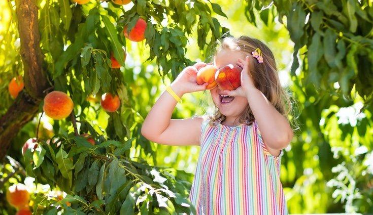 Intenta mantener tu árbol saludable